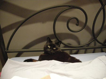 What do you mean recently moved cats can't take over their owner's side of the bed? Aren't those the rules?